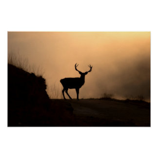 Solitary Red Stag Poster/Print