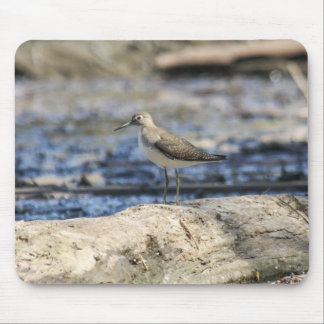 Solitary Sandpiper Mouse Pad