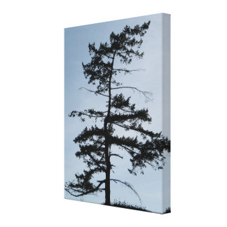 Solitary Survivor Tree Gallery Wrapped Canvas