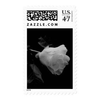 Solitary White Long Stem Rose Stamp
