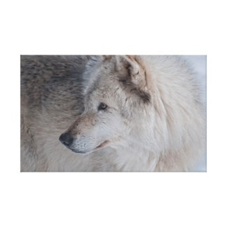 Solitary Wolf Canvas Prints
