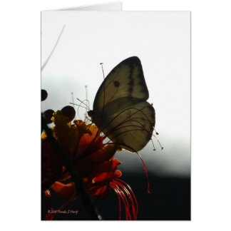 SOLITUDE 5 STATIONERY NOTE CARD