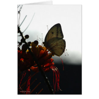 SOLITUDE 5a Stationery Note Card