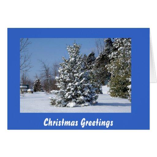 Solo árbol de hoja perenne de Snowladen Tarjeta De Felicitación