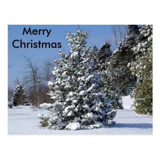 Solo árbol de hoja perenne de Snowladen Postal