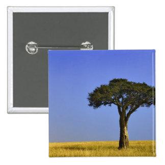 Solo árbol del acacia en los llanos herbosos, Masa Pin Cuadrado