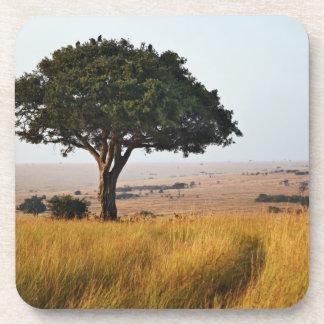 Solo árbol del acacia en los llanos herbosos, Masa Posavasos De Bebidas