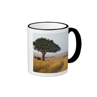 Solo árbol del acacia en los llanos herbosos, taza de dos colores