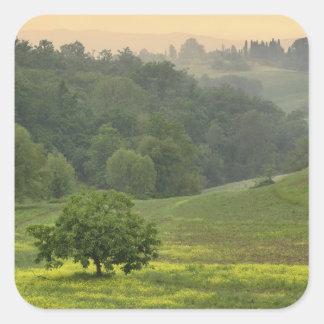 Solo árbol en el campo de granja agrícola, calcomanias cuadradas