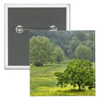 Solo árbol en el campo de granja agrícola Toscana Pin