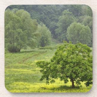 Solo árbol en el campo de granja agrícola, Toscana Posavasos De Bebidas