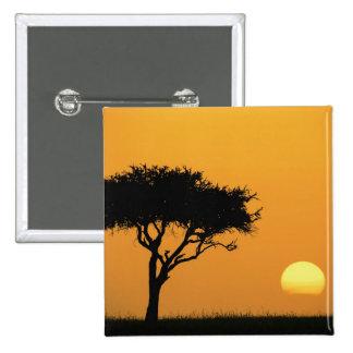 Solo árbol silueteado en la salida del sol, Masai  Pin