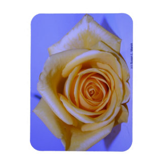 Solo azul color de rosa amarillento teñido iman flexible