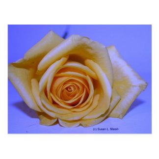 Solo azul color de rosa amarillento teñido tarjeta postal
