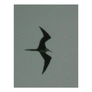 """solo bird 8.5"""" x 11"""" flyer"""