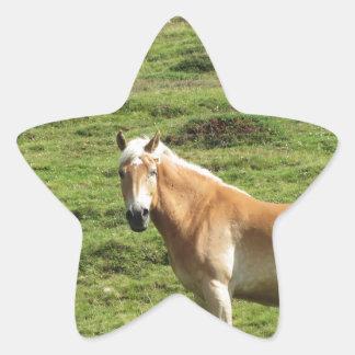 Solo caballo en un pasto alpino pegatina en forma de estrella