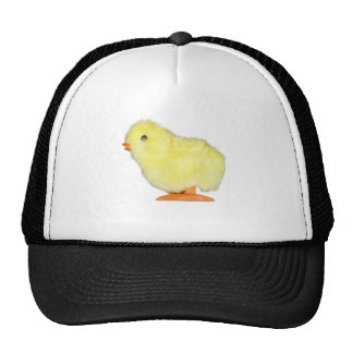 Solo Chick on Transparent Trucker Hat