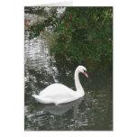 Solo cisne tarjetas