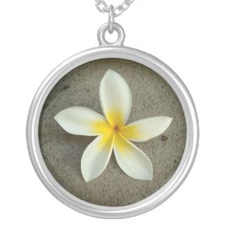 Solo collar de la flor de Hawaii del plumeria