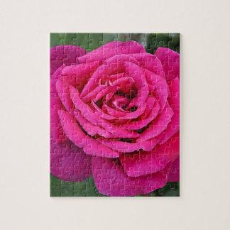 Solo color de rosa de color rosa oscuro puzzle