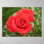 Solo color de rosa hermoso con Scripture. Poster