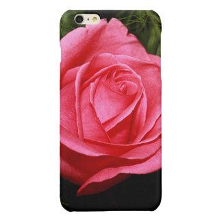Solo color de rosa rosado