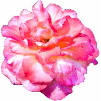 Solo color de rosa rosado esculturas fotográficas