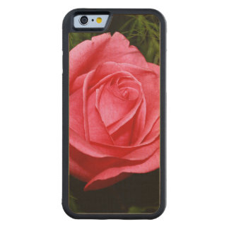 Solo color de rosa rosado funda de iPhone 6 bumper arce