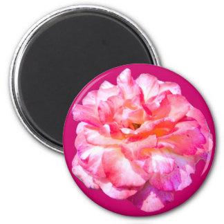 Solo color de rosa rosado imán de frigorifico