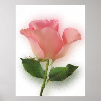Solo color de rosa rosado poster