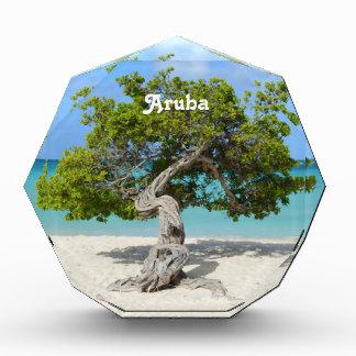 Solo Divi Divi Tree in Aruba Acrylic Award