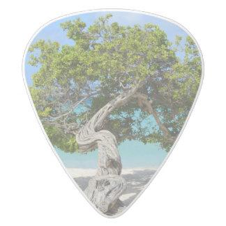 Solo Divi Divi Tree in Aruba White Delrin Guitar Pick