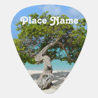 Solo Divi Divi Tree in Aruba Guitar Pick