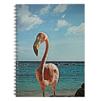 Solo flamingo vintage photo HFPHOT71 Notebook