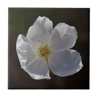 Solo flor blanco azulejo cuadrado pequeño