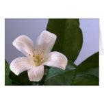 Solo flor blanco tarjetón