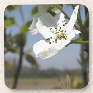 Solo flor de un peral en primavera posavasos