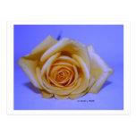 Solo fondo azul claro del rosa amarillo postal