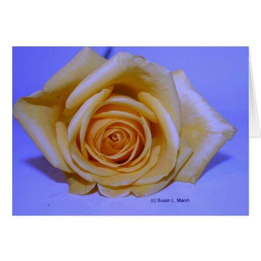 Solo fondo azul claro del rosa amarillo tarjeta pequeña