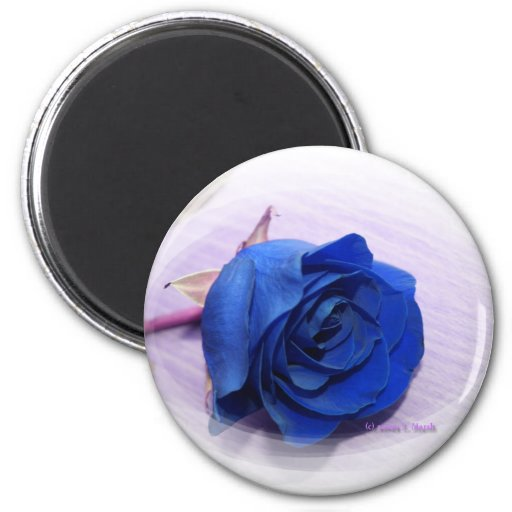 Solo fondo color de rosa, pálido azul marino imán de nevera