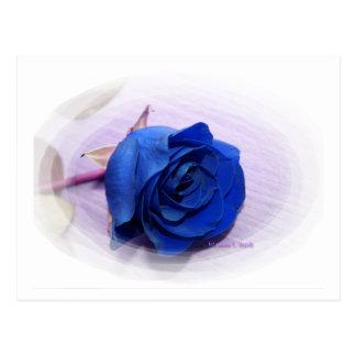 Solo fondo color de rosa, pálido azul marino postales