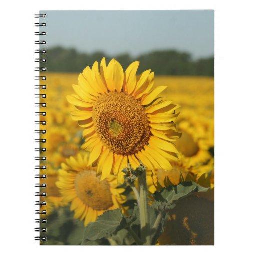 Solo girasol en un campo de girasoles cuadernos