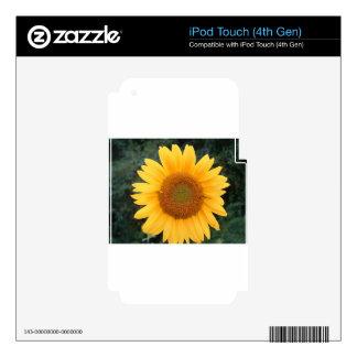 Solo girasol iPod touch 4G calcomanía