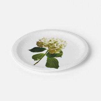 Solo Hydrangea blanco Platos De Papel
