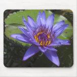 Solo lirio de agua púrpura Mousepad Tapetes De Ratones