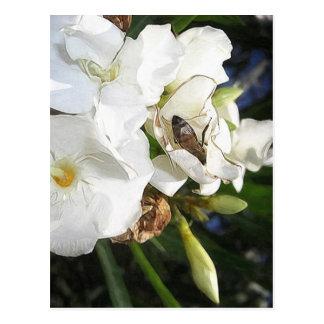 Solo Oleander blanco con la abeja 1 Postal