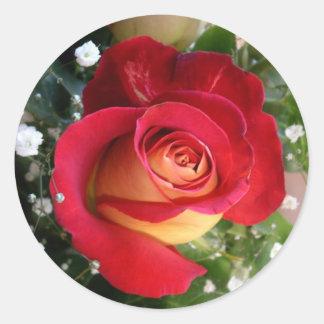 Solo pegatina color de rosa