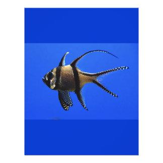 "solo-pescado-en-acuario folleto 8.5"" x 11"""