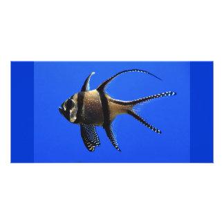 solo-pescado-en-acuario plantilla para tarjeta de foto
