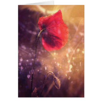 Solo Poppy Early Morning Cards